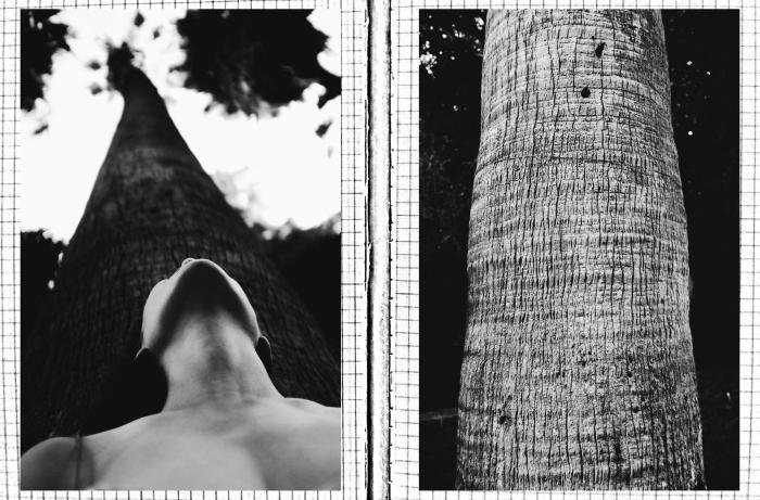 04.um tronco de sono vertical