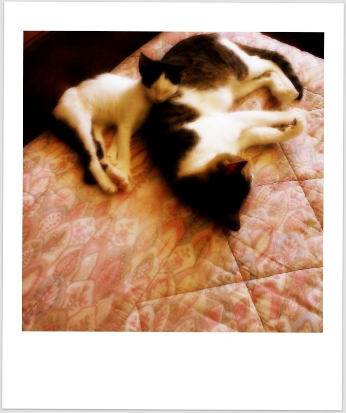 ac_01_gatos